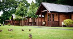 Escape to the heart of Surrey at Tilford Woods Lodge retreat. For a tranquil escape with plenty of amenities. Surrey, Amazing Places, Places Ive Been, The Good Place, Woods, Gardens, Amp, House Styles, Holiday