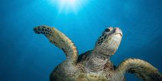 Save Turtles From Entrapment, Strangulation and Death With TTED Devices http://www.thepetitionsite.com/tell-a-friend/20997897#bbtw=631059606