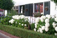 Auch im Vorgarten...... - Wohnen und Garten Foto