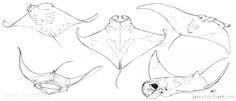 Wrist cover up Animal Sketches, Animal Drawings, Art Sketches, Art Drawings, Manta Ray Tattoos, Stingray Tattoo, Desenho Tattoo, Sketch Inspiration, Fish Art