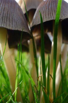 ✿ Mushrooms ✿