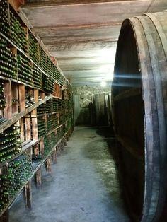 Wine 🍷 factory in Armenia