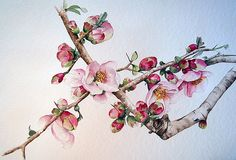Cherry blossoms in Japan Art by Independent Artists. Botanical Art, Botanical Illustration, Watercolor Illustration, Watercolor Flowers, Watercolor Paintings, Tattoo Fleur, Cherry Blossom Japan, Cherry Blossoms, Art Japonais