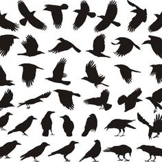 Illustration of black isolated vector silhouettes of carrion crow on the white background vector art, clipart and stock vectors. Silhouette Tattoos, Crow Silhouette, Silhouette Drawings, Tatoo Bird, Black Bird Tattoo, Crow Art, Raven Art, Black Crow Tattoos, Corvo Tattoo
