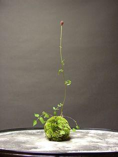 Kokedama, mi nuevo vicio: arte de cultivo de plantas con ahorro de agua, sin maceta y muy decorativo
