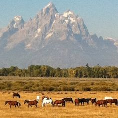 Triangle X Ranch, Wyoming
