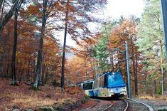 FERROVIA VIGEZZINA (PIEMONTE) – Un viaggio spettacolare nelle Alpi meno note: 52.200 chilometri su ponti a strapiombo, dentro gallerie e boschi, passando accanto a pittoresche cascate. La ferrovia storica che collega Domodossola a Locarno, in Svizzera, ha un tracciato di montagna con pendenze che raggiungono il 60 per cento. Ma lo spettacolo non è solo quello che si gode dal finestrino durante il viaggio. Vale la pena fare più soste (è possibile dividere il percorso in tappe) per scoprire i…