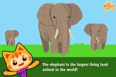 Fun Facts - Elephants are the largest living animals on earth.