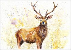 Gorgeous contemporary wildlife fine art prints and original watercolour paintings by artist Helen April Rose Watercolor Paintings, Original Paintings, Watercolours, Deer Paintings, Stag Animal, Animal Pics, Woodland Decor, Woodland Bedroom, Highland Cow Print