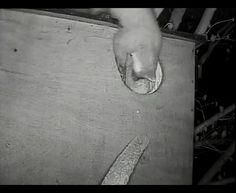 Een steenmarter kijkt in de bosuilenkast. In de kast twee jonge bosuilen.