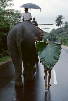 Sri Lanka. Elephants | Steve McCurry