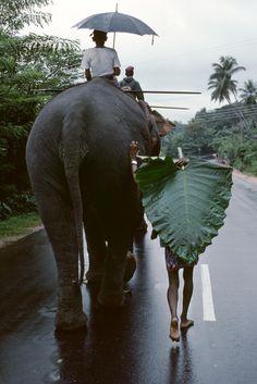 Sri Lanka. Elephants   Steve McCurry