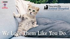 We love them like you do. | Tuscawilla Animal Hospital has veterinarians that care about cats and dogs too! Call us today to schedule an appointment. #veterinarymedicine #animalhospital Veterinary Medicine, Veterinarians, Like You, Schedule, Dog Cat, Cats, Animals, Timeline, Gatos