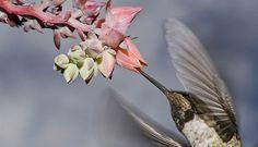 Audubon Society | Hummingbirds at Home | Beta Version