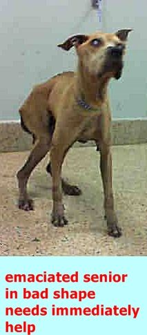 RODNEY (A1826617) I am a male brown Labrador Retriever mix. The shelter staff think I am about 9 years old. I was found as a stray and I may be available for adoption on 11/05/2016. — Miami Dade Animal Services Pet Adoption and Protection Center. https://www.facebook.com/urgentdogsofmiami/photos/a.474760019225073.115405.191859757515102/1335801423120924/?type=3&theater