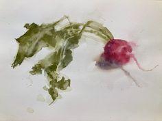 "Michele Clamp on Instagram: ""Radish study from a Wendy Artin watercolor workshop. #watercolor #watercolorstilllife #radish #radishpaintings #vegetablestilllife…"""