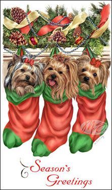 yorkie christmas images pictures - Buscar con Google