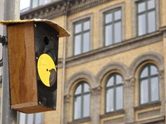A birdhouse made from an old vinyl...of bird noises. Nice touch.