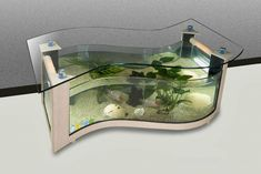 If you anticipate building an aquarium, please make sure that you get your fish supply from a spot that genuinely cares about animal health. An aquarium has to be maintained regularly to be certain that the fish are kept healthy.
