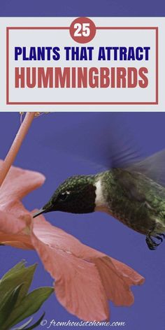This list of hummingbird plants has suggestions for annuals, perennials, hanging basket flowers, bushes and even vines that will attract hummingbirds to your garden. And they all have gorgeous flowers so they will look beautiful in your yard. #fromhousetohome #gardendesign #gardening #birds #shadeplants #sunperennials