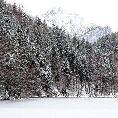 Découverte du Nord du Tyrol et de ses lacs glacés ! #tyrol #austria #forest #lake #wild #mountains #nature #beautifulview #hike #discover #grammasters3 #discoveraustria