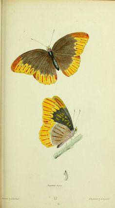 v. 1 - American entomology : - Biodiversity Heritage Library