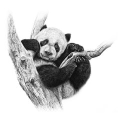 drawing realistic skin Artist Makes Hyper Realistic Drawings To The Point Where We See The Pores Of The Skin Panda Drawing, Bear Drawing, Drawing Tips, Realistic Drawings, Cool Drawings, Surealism Art, Funny Cartoon Memes, Panda Wallpapers, Panda Art