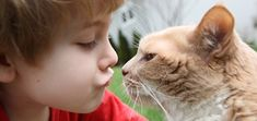 Four Life Lessons Cats Can Teach Your Kids   Catster  http://www.catster.com/lifestyle/cat-behavior-care-cats-and-kids-important-life-lessons-teach