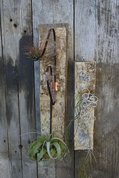Twisted Wire and Bark Air Plant Holders