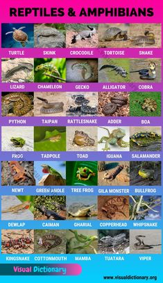 Most Deadly Animal, Deadly Animals, Learn English Words, English Lessons, Learning English, Preschool Charts, Preschool Activities, Names Of Birds, Animals Of The World