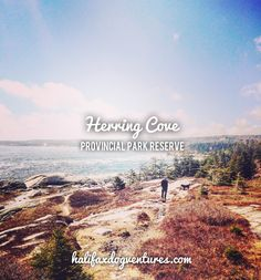 Herring Cove Provincial Park in Halifax, Nova Scotia is a stunning place for a seaside dogventure. New Brunswick Canada, Atlantic Canada, Crashing Waves, Nova Scotia, Dog Friends, Best Dogs, Seaside, Coastal, Destinations