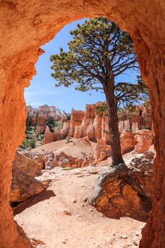 Rock formations on a hiking trail in Bryce Canyon National Park, Utah, USA. Places To Travel, Places To Visit, Bryce Canyon Utah, Park Pictures, Us National Parks, Famous Places, Hiking Trails, Nature Photos, Beautiful Landscapes
