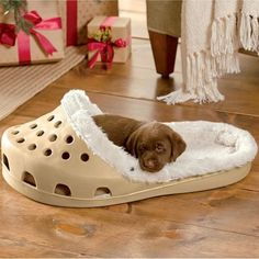 Shoe Pet Bed! So cute