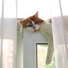 Magical Meow • ЛЮДМИЛА