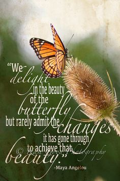 Butterfly Inspirational Quotes | Inspirational Butterfly ART QUOTE - Wall Art Print - 8x12 Photograph