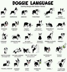 How to understand what your dogs says? This Doggie Language guide will help you! #DoggieLove @PetPremium Pet Insurance