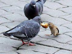 スズメとかいう世界一臆病な生き物wwwwwwwwwwwwww   2ちゃんねるスレッドまとめブログ - アルファルファモザイク