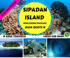 Explore Sipadan and grab the package from D Asia Travels ! Experience Sipadan and discover the best place and time to visit ! One of the best dive sites in the world,the scenic oceanic island of Sipadan was formed by living corals growing on top of an extinct undersea volcano. Sipadan is famous for its vast population of green and hawksbill turtles.