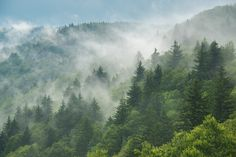 Clouds are rolling through after the rain in the Great Smoky Mountains