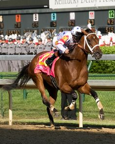 Big Brown 2008 winning the Kentucky Derby. Sports Pictures, Horse Pictures, Saratoga Horse Racing, Derby Winners, Sport Of Kings, Big Brown, Brown Horse, Thoroughbred Horse, Derby Day