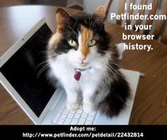 What would your pet think if he caught you surfing Petfinder?