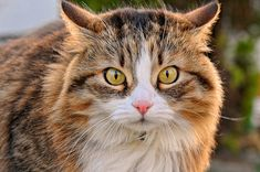 Sound Advice For Taking Care Of A Cat - http://purebredcatrescue.net/sound-advice-for-taking-care-of-a-cat/