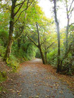The woodland walk. — in Ireland.