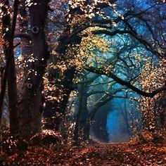 enchanted wood..