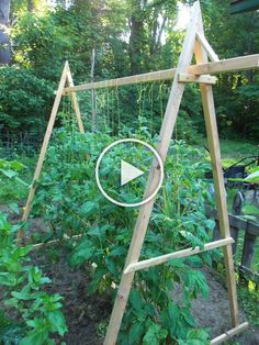 tomato trellis- better than all those pesky wire cones - Modern Garden Paths, Garden Landscaping, Tomato Trellis, Wire, Outdoor Structures, Landscape, Decor, Front Yard Landscaping, Scenery