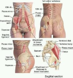 Relieve low back pain by getting a therapeutic massage on this muscle. Hip Flexor- Psoas Major and Illiacus psoas pain Muscle Anatomy, Body Anatomy, Human Anatomy, Fitness Workouts, Sport Fitness, Massage Tips, Massage Therapy, Anatomy And Physiology, Physical Therapy