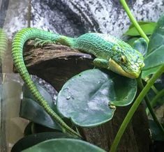 Is it Inhumane to Keep Exotics as Pets? — The Ethics of Reptile Keeping