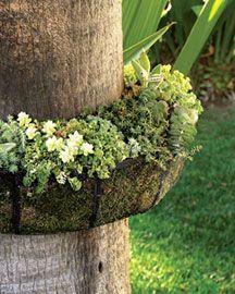 Unique tree trunk planter