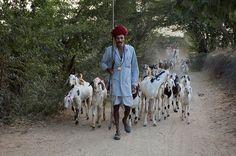 goat herder, India - Steve McCurry
