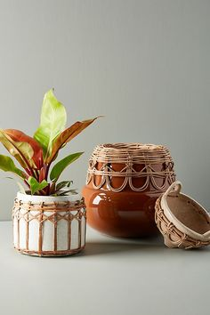 Pacifico Pot by Anthropologie in White, Decor Home Decor Accessories, Decorative Accessories, Decorative Objects, Garden Accessories, Big Indoor Plants, Potted Plants, Home Interior, Interior Design, Interior Plants